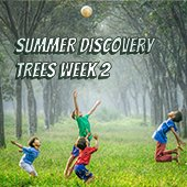 Summer Discovery Trees Week 2